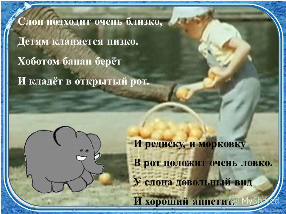 Слон подходит очень близко, Детям кланяется низко. Хоботом банан берёт И кладёт в открытый рот. И редиску, и морковку В рот положит очень ловко. У слона довольный вид И хороший аппетит.