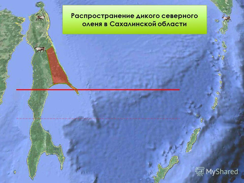 Распространение дикого северного оленя в Сахалинской области