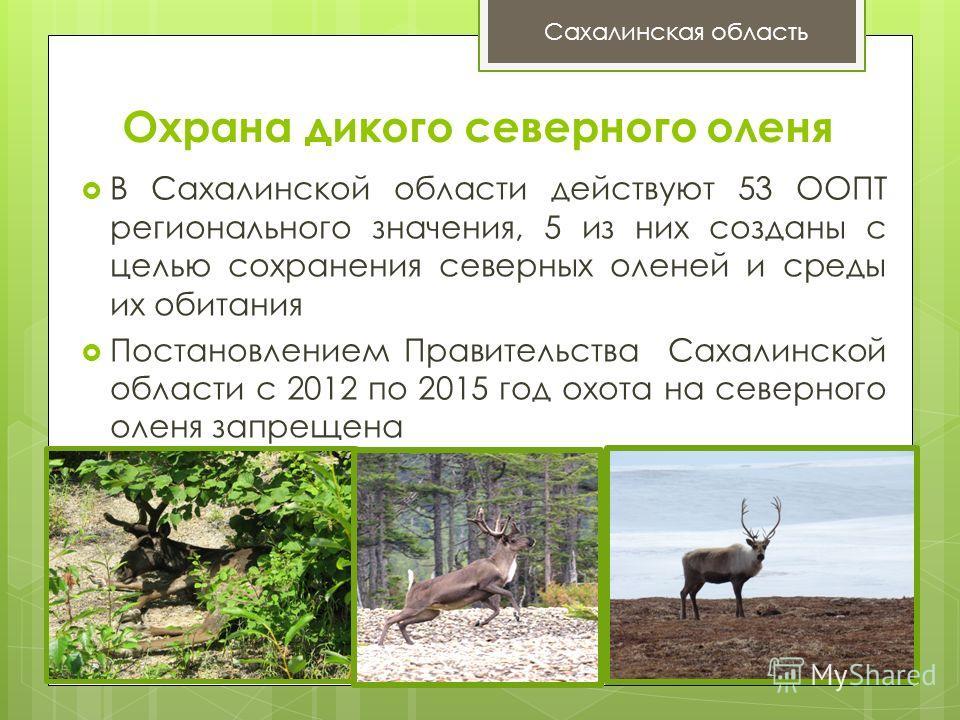Охрана дикого северного оленя В Сахалинской области действуют 53 ООПТ регионального значения, 5 из них созданы с целью сохранения северных оленей и среды их обитания Постановлением Правительства Сахалинской области с 2012 по 2015 год охота на северно