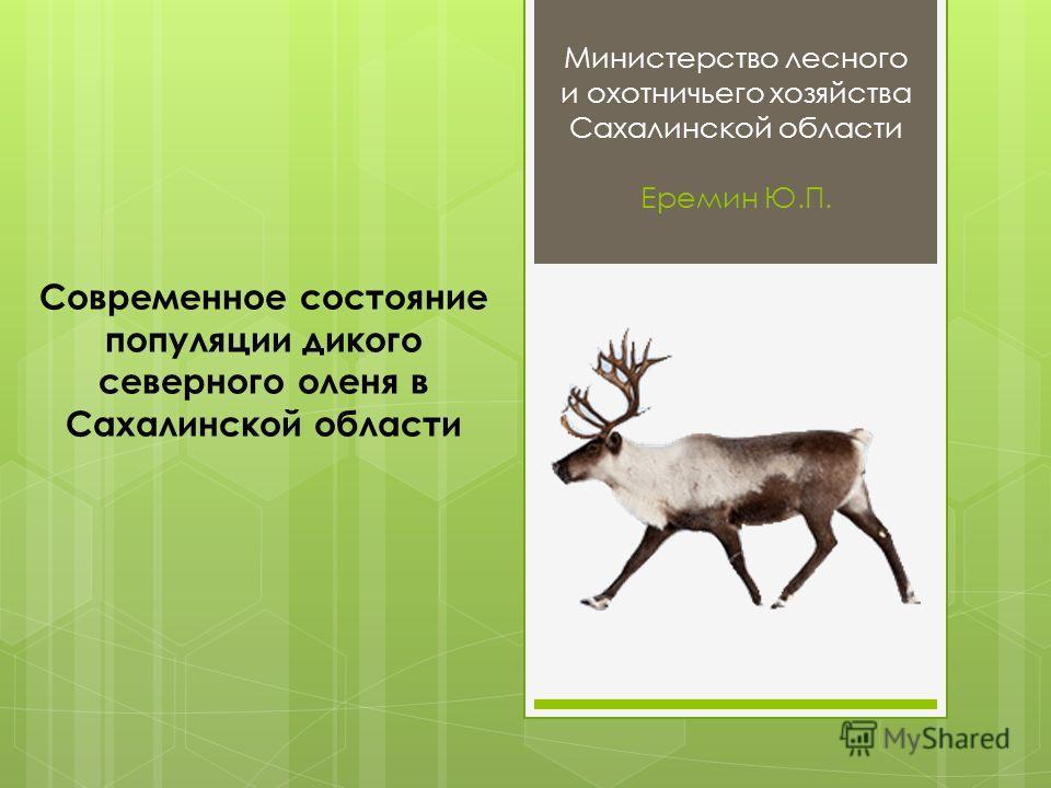 Министерство лесного и охотничьего хозяйства Сахалинской области Еремин Ю.П. Современное состояние популяции дикого северного оленя в Сахалинской области