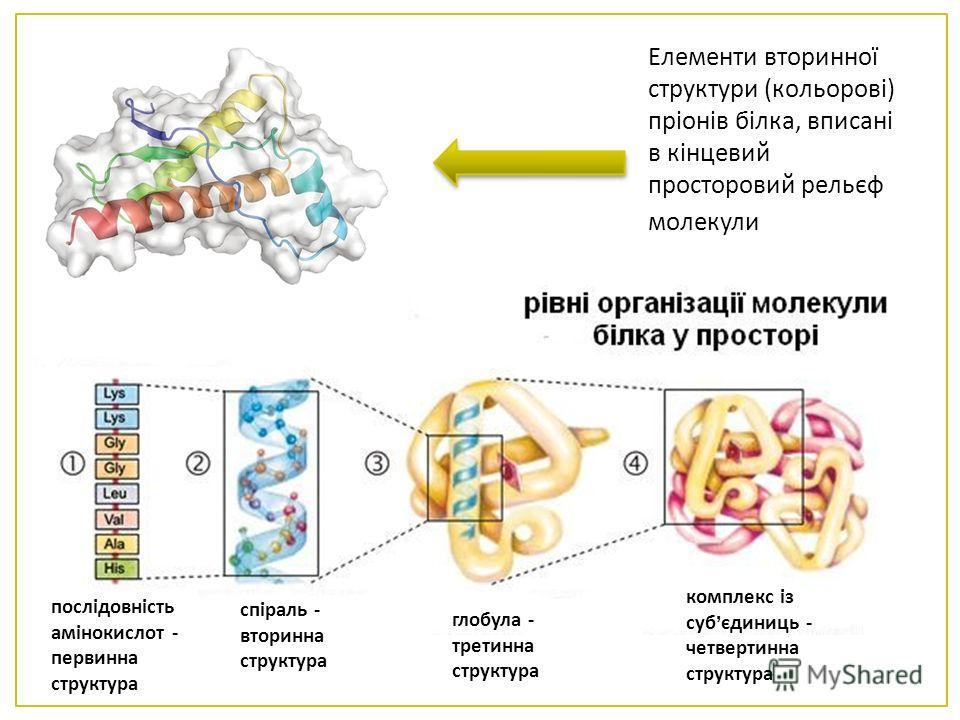 Елементи вторинної структури ( кольорові ) пріонів білка, вписані в кінцевий просторовий рельєф молекули. послідовність амінокислот - первинна структура спіраль - вторинна структура глобула - третинна структура комплекс із суб єдиниць - четвертинна с