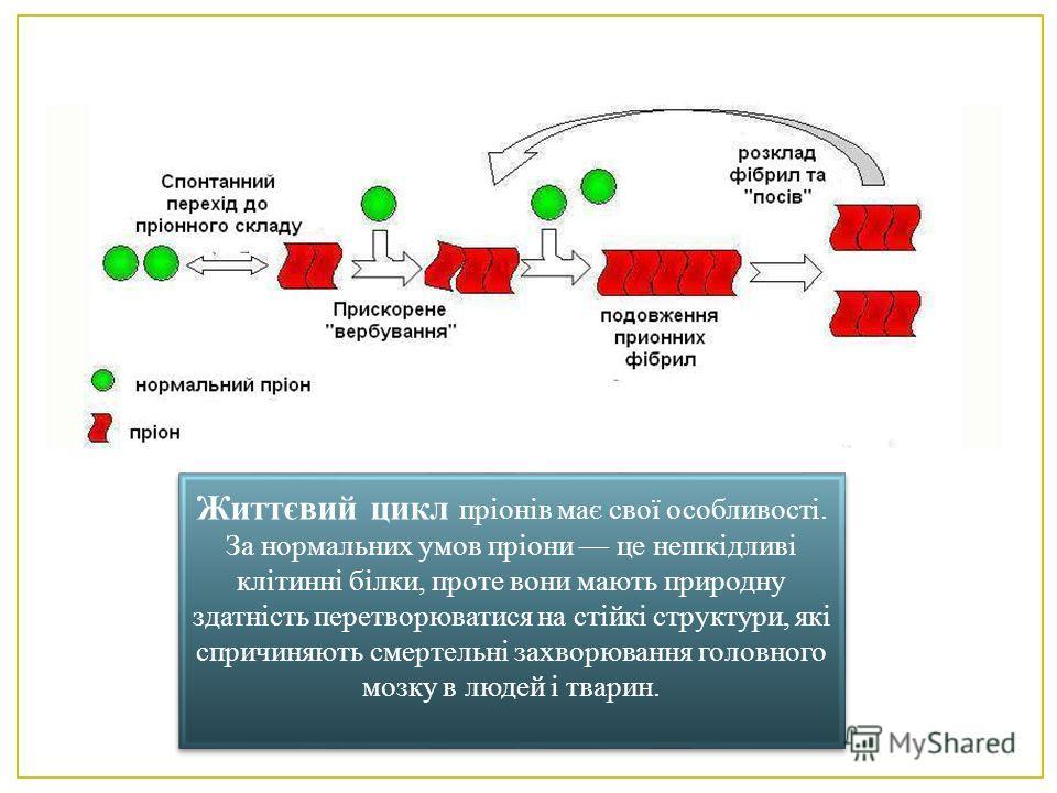 Життєвий цикл пріонів має свої особливості. За нормальних умов пріони це нешкідливі клітинні білки, проте вони мають природну здатність перетворюватися на стійкі структури, які спричиняють смертельні захворювання головного мозку в людей і тварин.