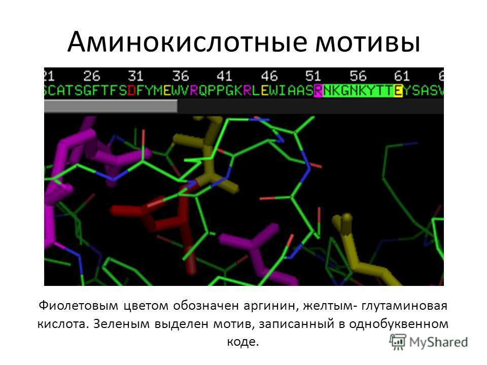 Аминокислотные мотивы Фиолетовым цветом обозначен аргинин, желтым- глутаминовая кислота. Зеленым выделен мотив, записанный в однобуквенном коде.