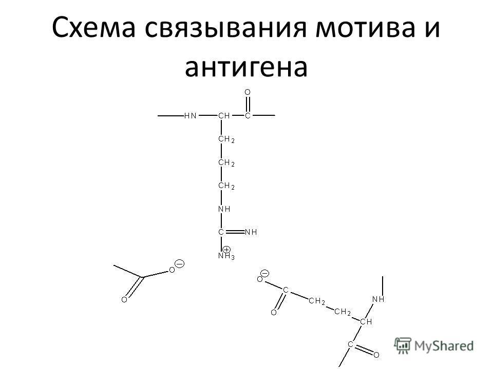 Схема связывания мотива и антигена