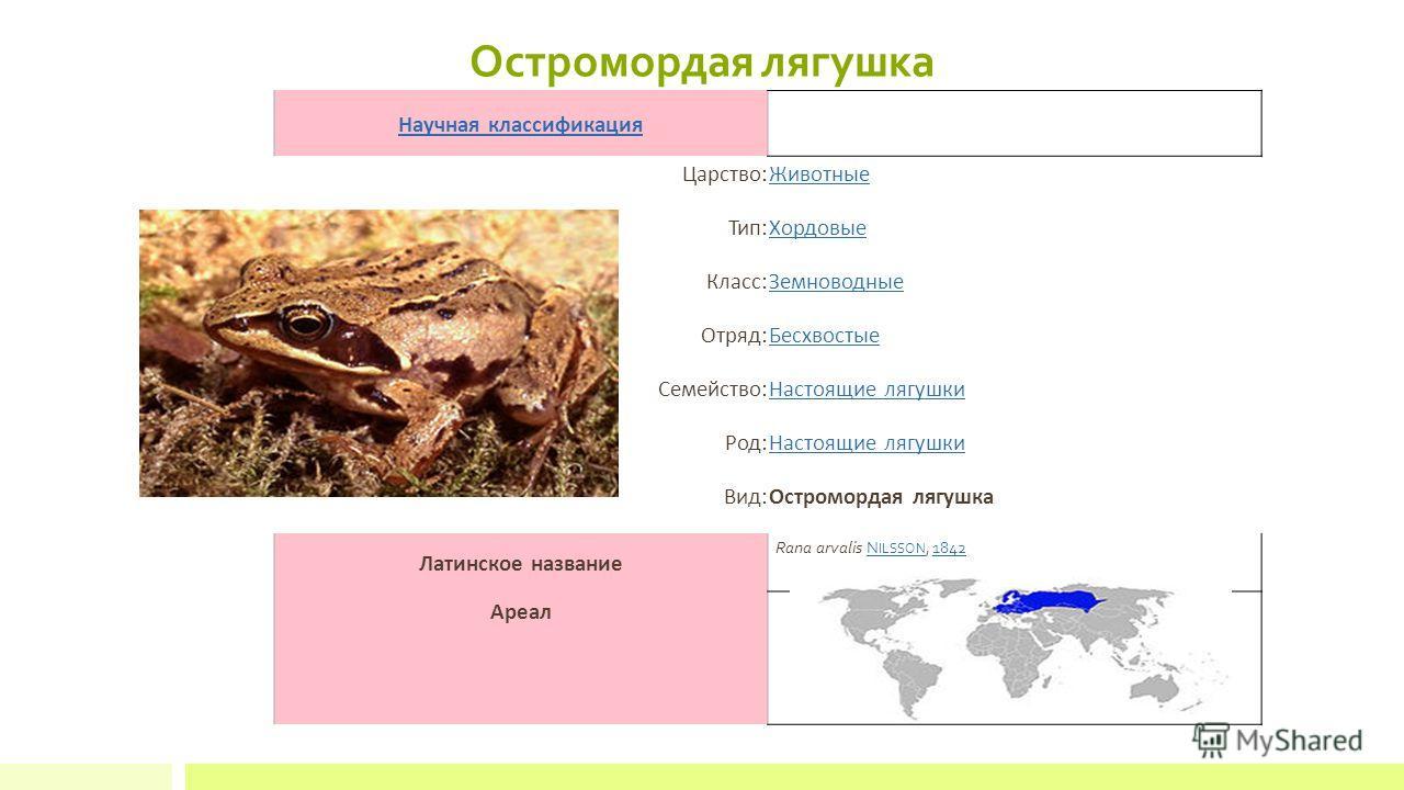 Остромордая лягушка Научная классификация Царство:Животные Тип:Хордовые Класс:Земноводные Отряд:Бесхвостые Семейство:Настоящие лягушки Род:Настоящие лягушки Вид:Остромордая лягушка Латинское название Rana arvalis N ILSSON, 1842N ILSSON1842 Ареал