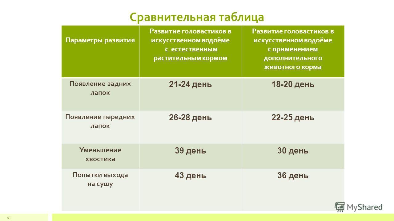 Сравнительная таблица Параметры развития Развитие головастиков в искусственном водоёме с естественным растительным кормом Развитие головастиков в искусственном водоёме с применением дополнительного животного корма Появление задних лапок 21-24 день18-