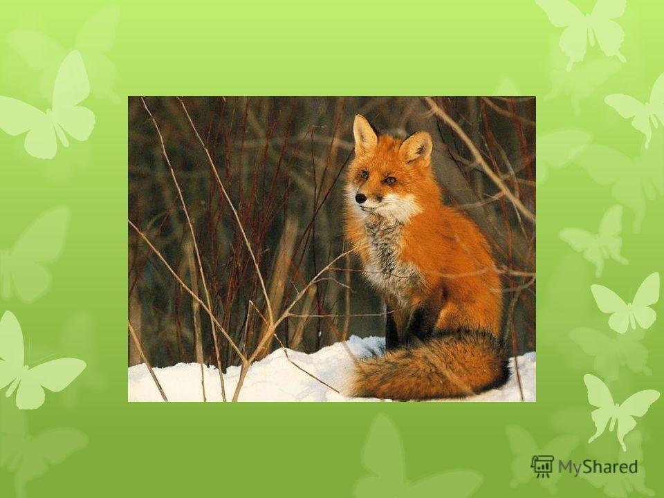 Какому животному принадлежат следы?