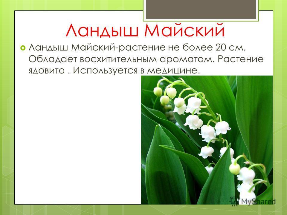 Ландыш Майский Ландыш Майский-растение не более 20 см. Обладает восхитительным ароматом. Растение ядовито. Используется в медицине.