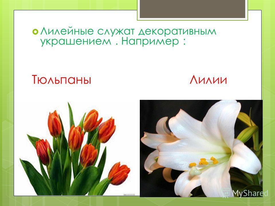 Лилейные служат декоративным украшением. Например : Тюльпаны Лилии