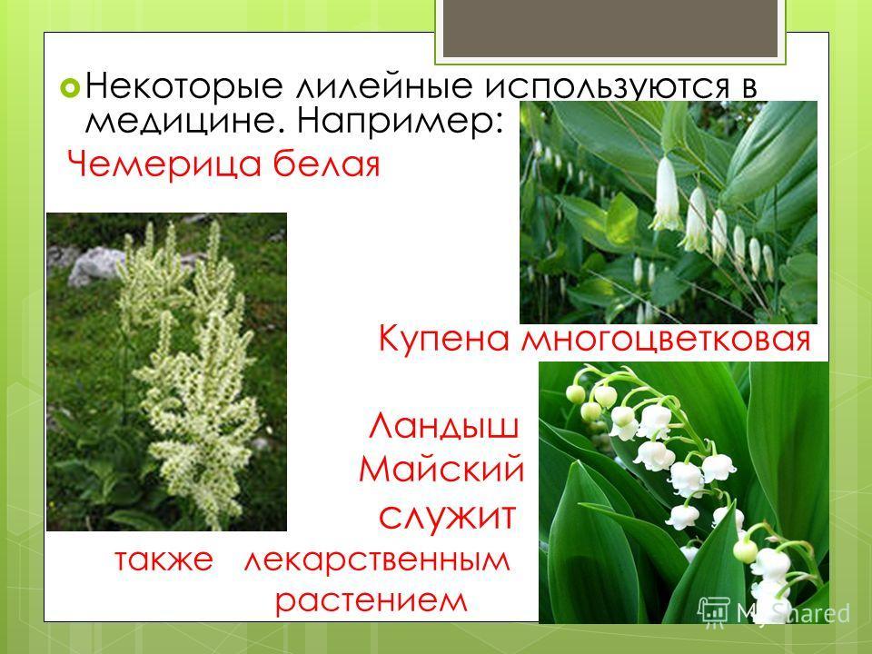 Некоторые лилейные используются в медицине. Например: Чемерица белая Купена многоцветковая Ландыш Майский служит также лекарственным растением