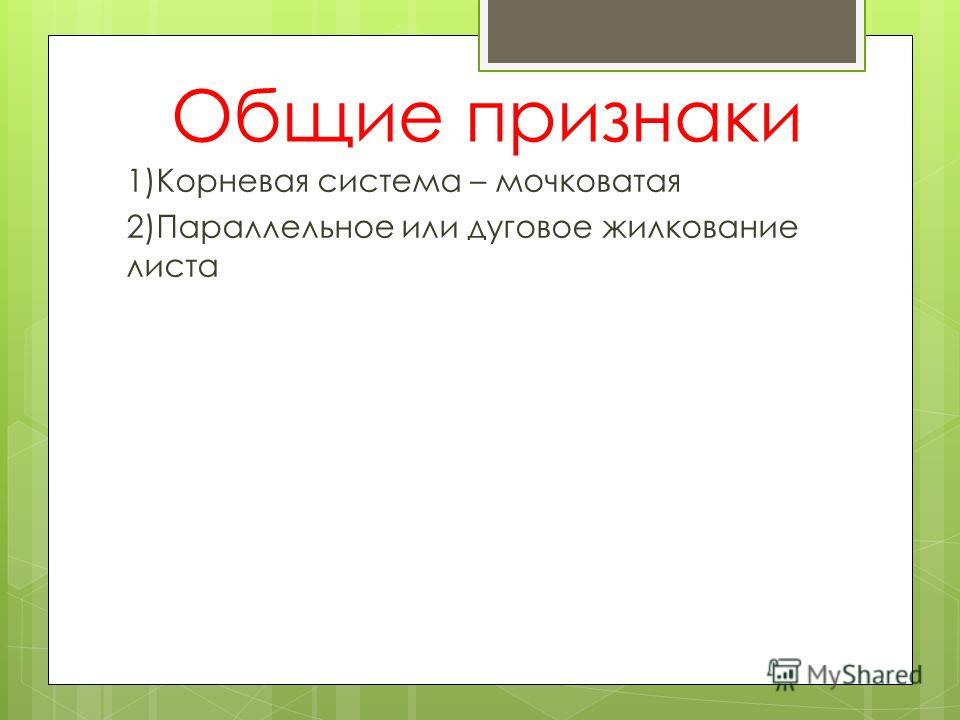 Общие признаки 1)Корневая система – мочковатая 2)Параллельное или дуговое жилкование листа