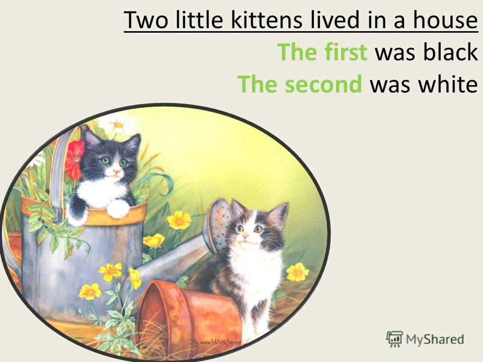 Two little kittens lived in a house The first was black The second was white