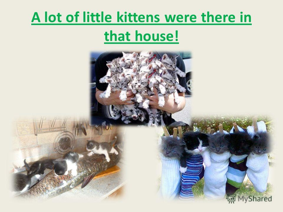 A lot of little kittens were there in that house!