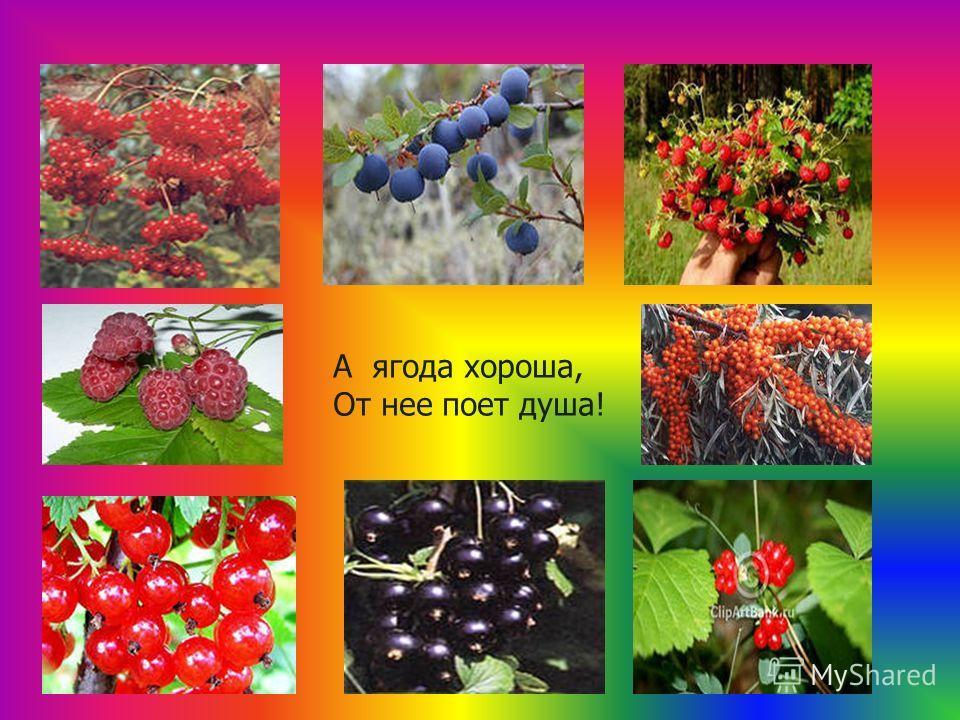 А ягода хороша, От нее поет душа!