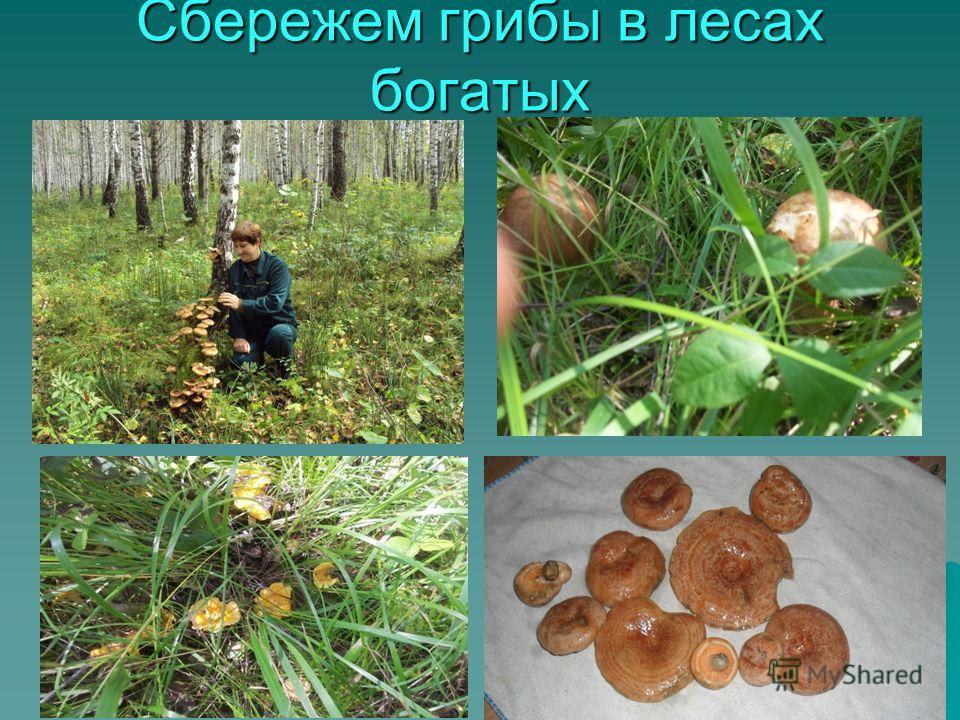 Сбережем грибы в лесах богатых