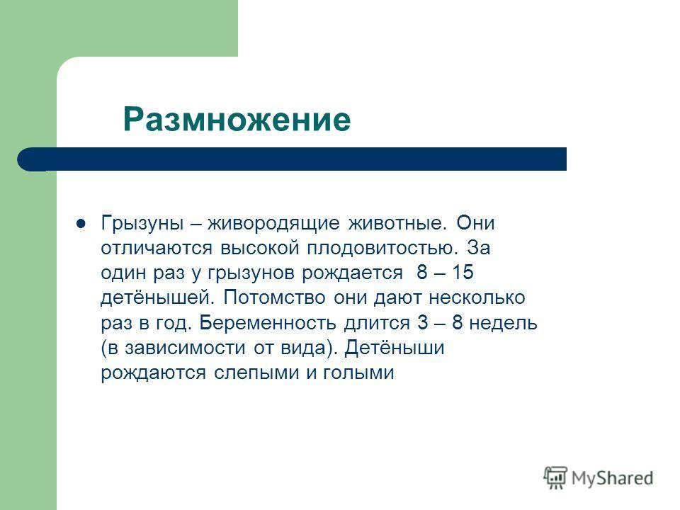 Размножение Грызуны – живородящие животные. Они отличаются высокой плодовитостью. За один раз у грызунов рождается 8 – 15 детёнышей. Потомство они дают несколько раз в год. Беременность длится 3 – 8 недель (в зависимости от вида). Детёныши рождаются
