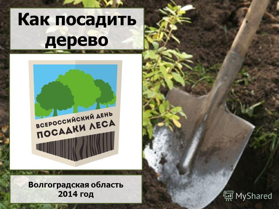Как посадить дерево Волгоградская область 2014 год