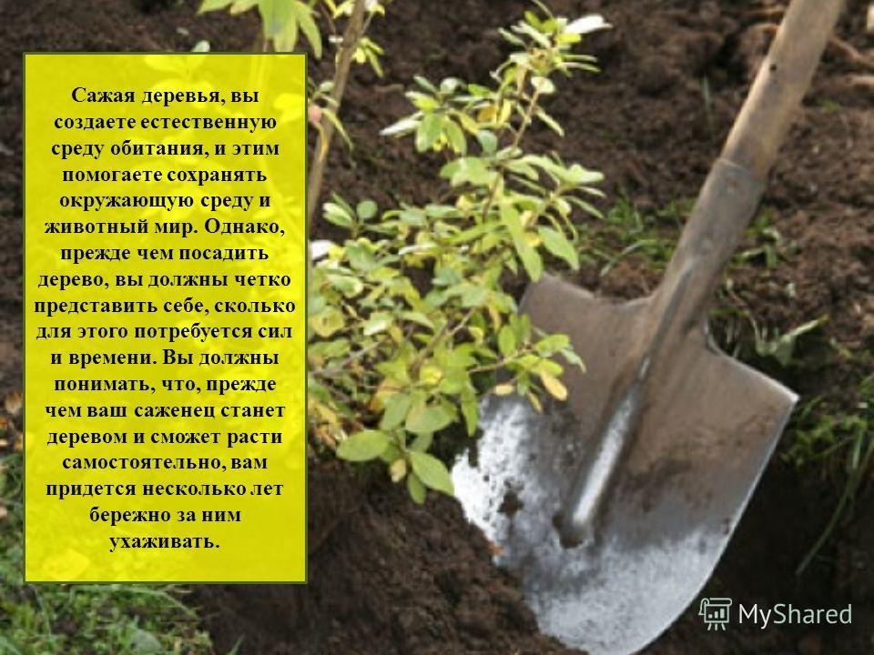 Сажать дерево во сне для женщины 53