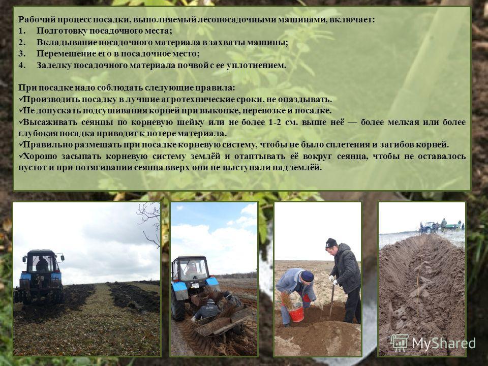 Рабочий процесс посадки, выполняемый лесопосадочными машинами, включает: 1.Подготовку посадочного места; 2.Вкладывание посадочного материала в захваты машины; 3.Перемещение его в посадочное место; 4.Заделку посадочного материала почвой с ее уплотнени