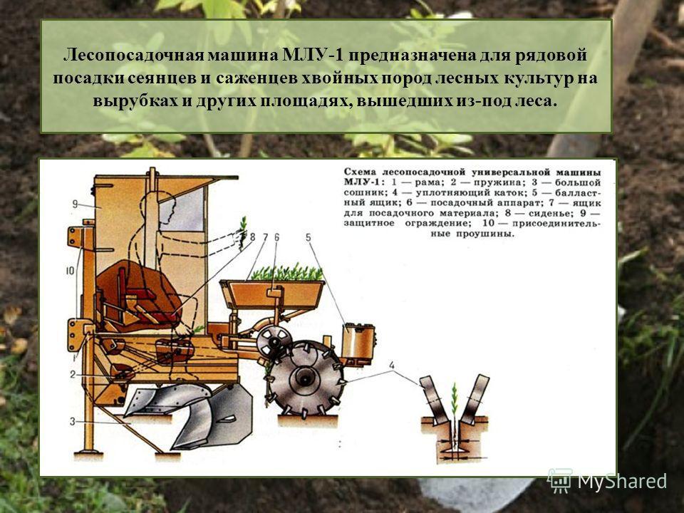 Лесопосадочная машина МЛУ-1 предназначена для рядовой посадки сеянцев и саженцев хвойных пород лесных культур на вырубках и других площадях, вышедших из-под леса.