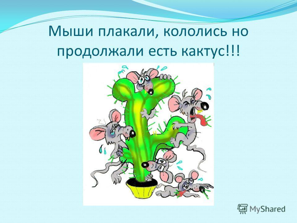 Мыши плакали, кололись но продолжали есть кактус!!!