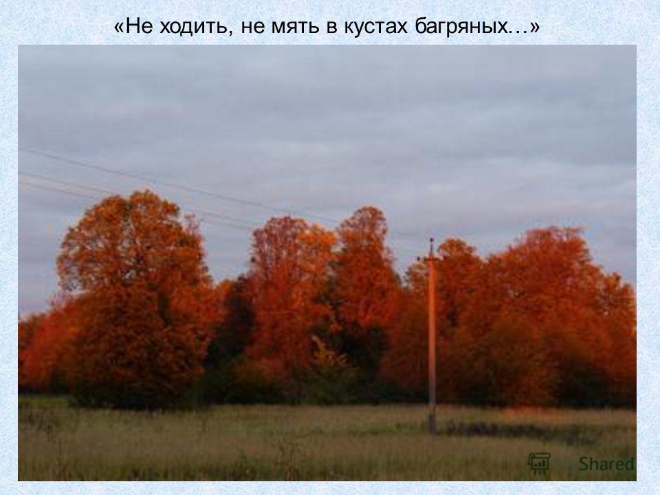 «Не ходить, не мять в кустах багряных…»