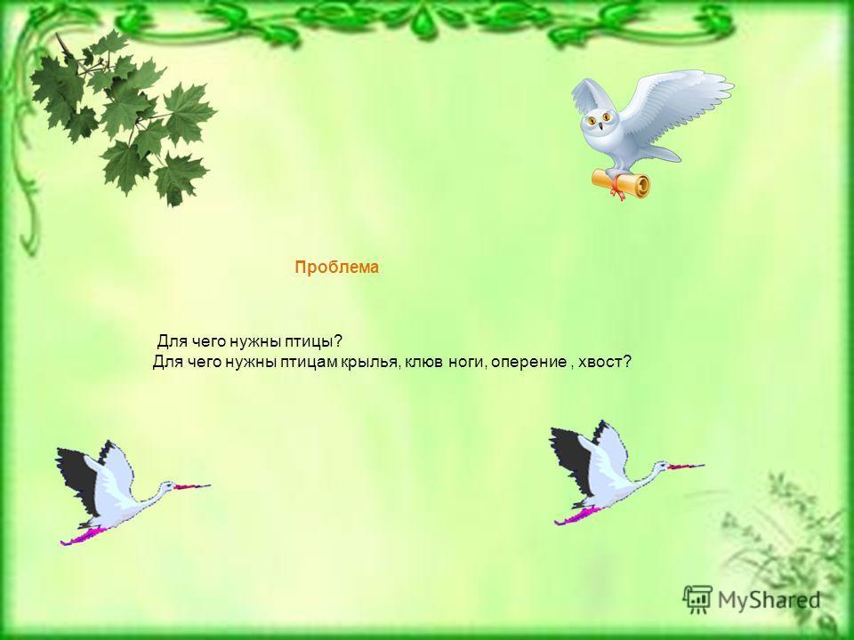 Проблема Для чего нужны птицы? Для чего нужны птицам крылья, клюв ноги, оперение, хвост?