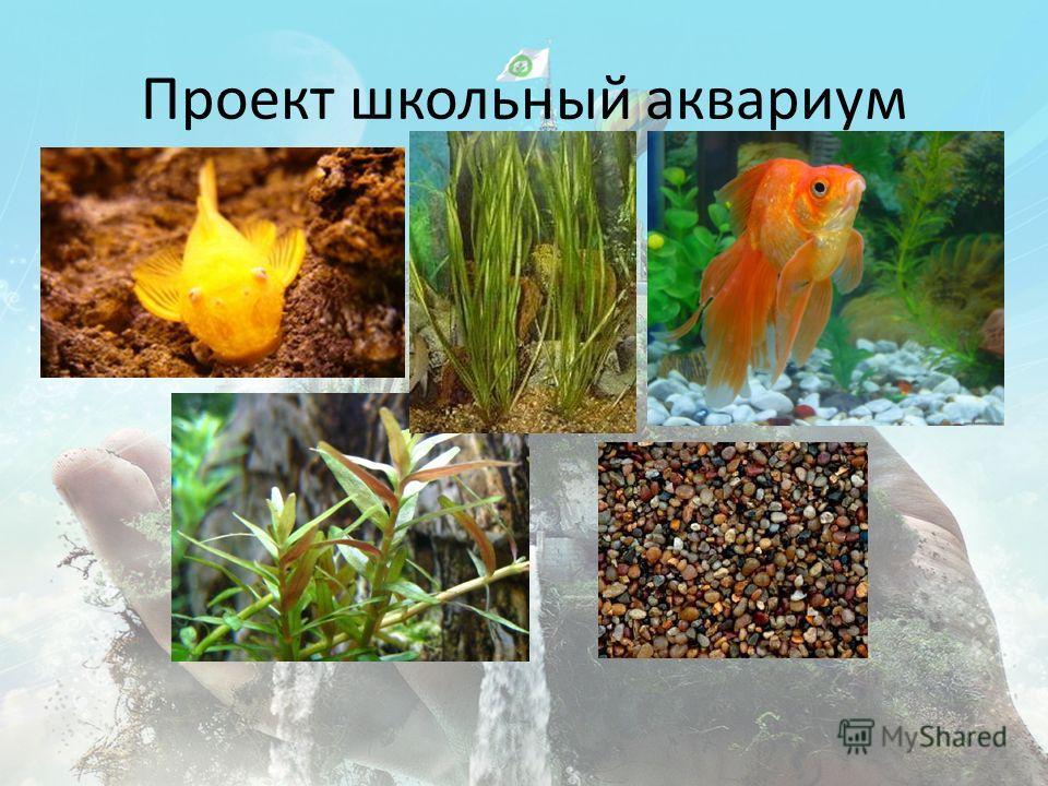 Проект школьный аквариум