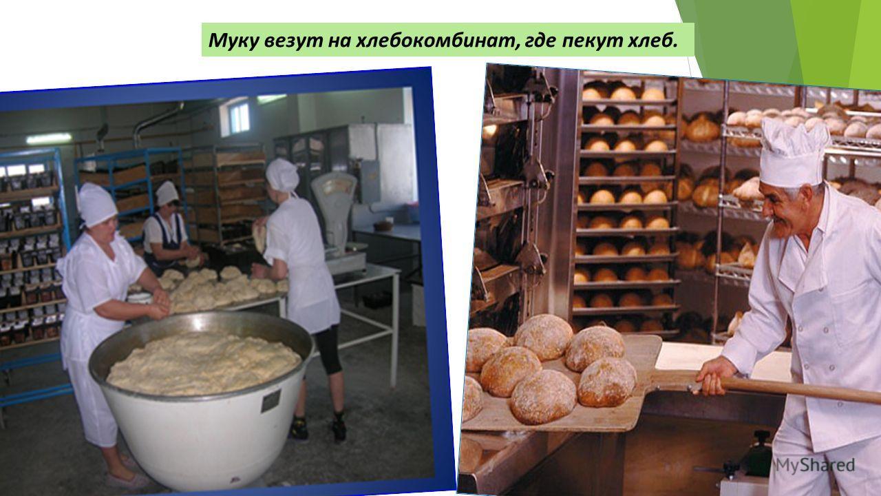Муку везут на хлебокомбинат, где пекут хлеб.