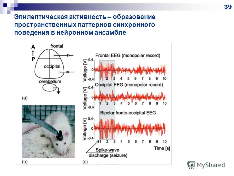 Эпилептическая активность – образование пространственных паттернов синхронного поведения в нейронном ансамбле 39