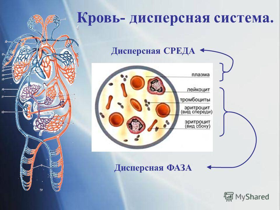 Кровь- дисперсная система. Дисперсная ФАЗА Дисперсная СРЕДА