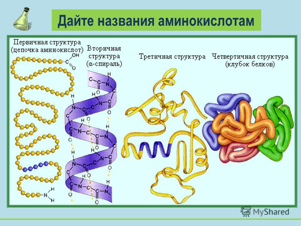 Дайте названия аминокислотам