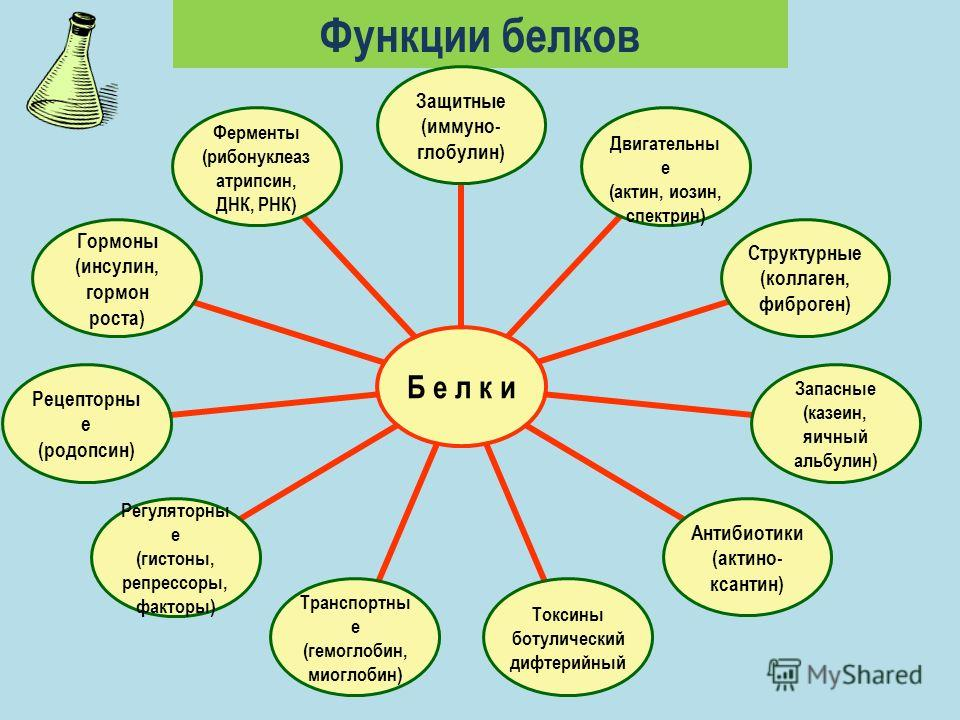 Функции белков Б е л к и Защитные (иммуно- глобулин) Двигательные (актин, иозин, спектрин) Структурные (коллаген, фиброген) Запасные (казеин, яичный альбулин) Антибиотики (актино- ксантин) Токсины ботулическийдифтерийный Транспортные (гемоглобин, мио