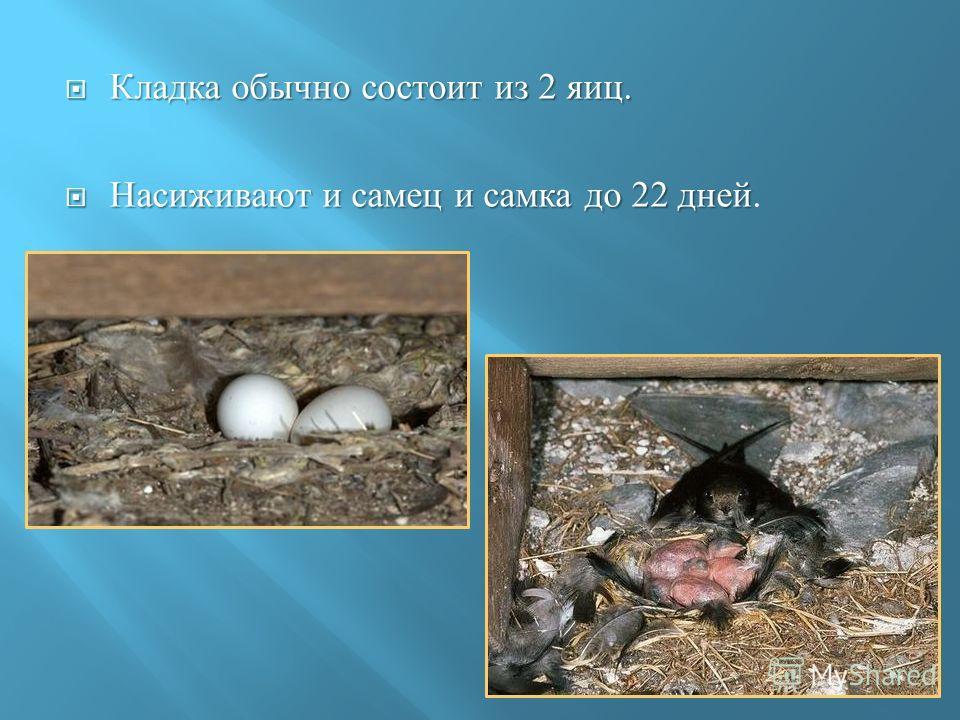 Кладка обычно состоит из 2 яиц. Кладка обычно состоит из 2 яиц. Насиживают и самец и самка до 22 дней Насиживают и самец и самка до 22 дней.