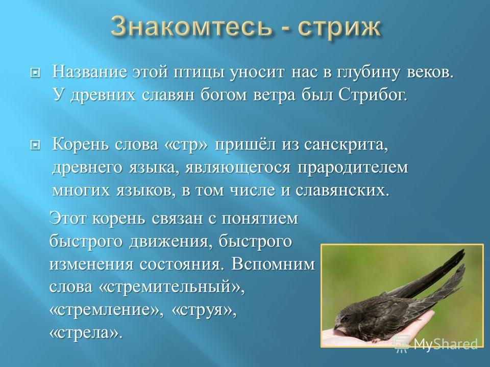 Название этой птицы уносит нас в глубину веков. У древних славян богом ветра был Стрибог. Название этой птицы уносит нас в глубину веков. У древних славян богом ветра был Стрибог. Корень слова « стр » пришёл из санскрита, древнего языка, являющегося