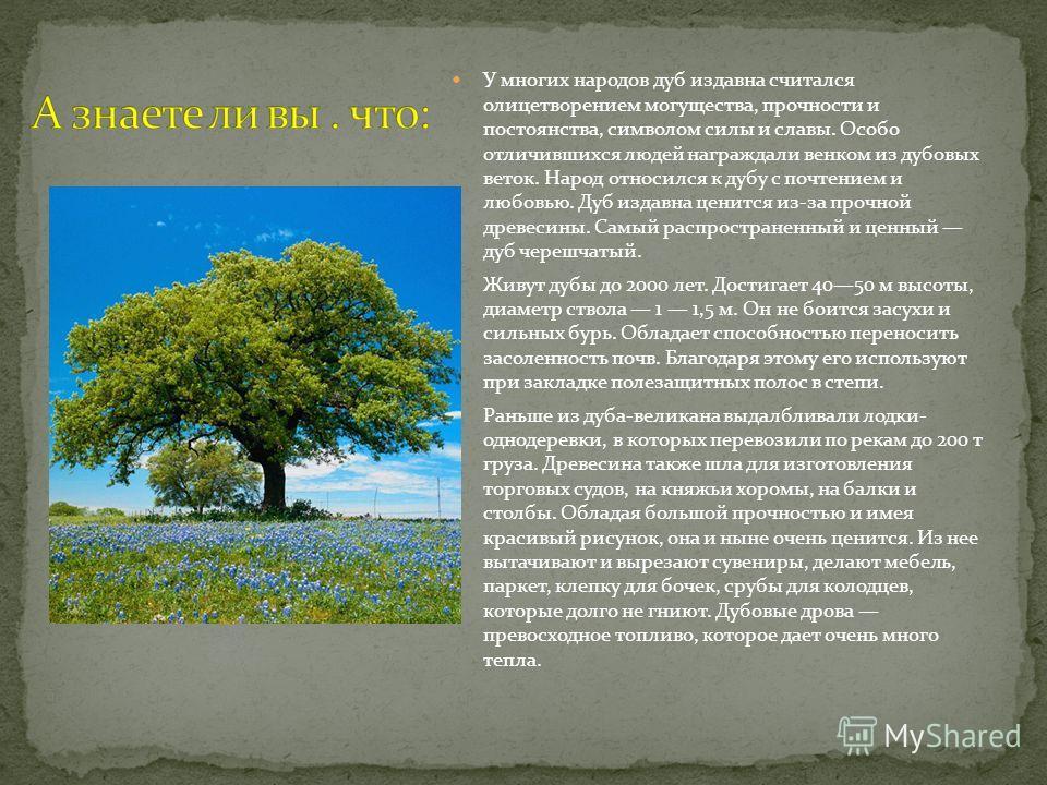 У многих народов дуб издавна считался олицетворением могущества, прочности и постоянства, символом силы и славы. Особо отличившихся людей награждали венком из дубовых веток. Народ относился к дубу с почтением и любовью. Дуб издавна ценится из-за проч