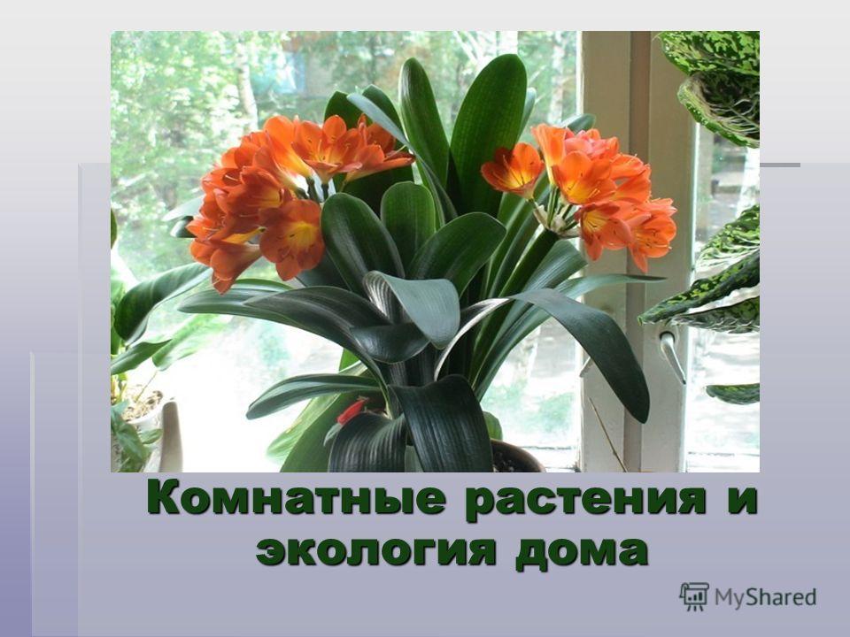 Комнатные растения и экология дома