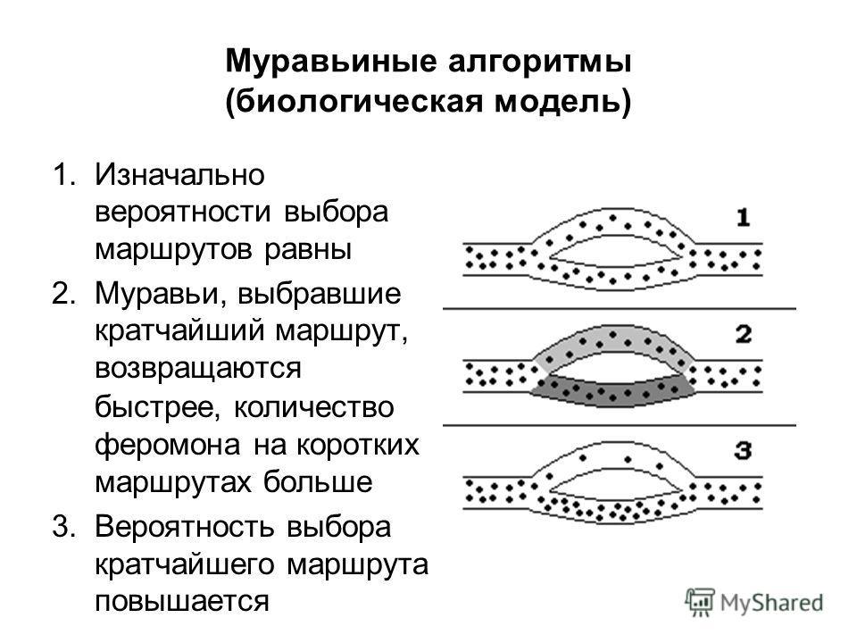 Муравьиные алгоритмы (биологическая модель) 1.Изначально вероятности выбора маршрутов равны 2.Муравьи, выбравшие кратчайший маршрут, возвращаются быстрее, количество феромона на коротких маршрутах больше 3.Вероятность выбора кратчайшего маршрута повы