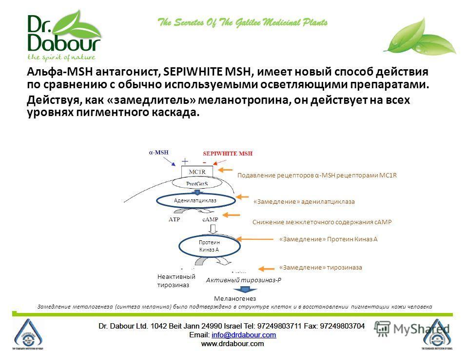Альфа-MSH антагонист, SEPIWHITE MSH, имеет новый способ действия по сравнению с обычно используемыми осветляющими препаратами. Действуя, как «замедлитель» меланотропина, он действует на всех уровнях пигментного каскада. Меланогенез Замедление металог
