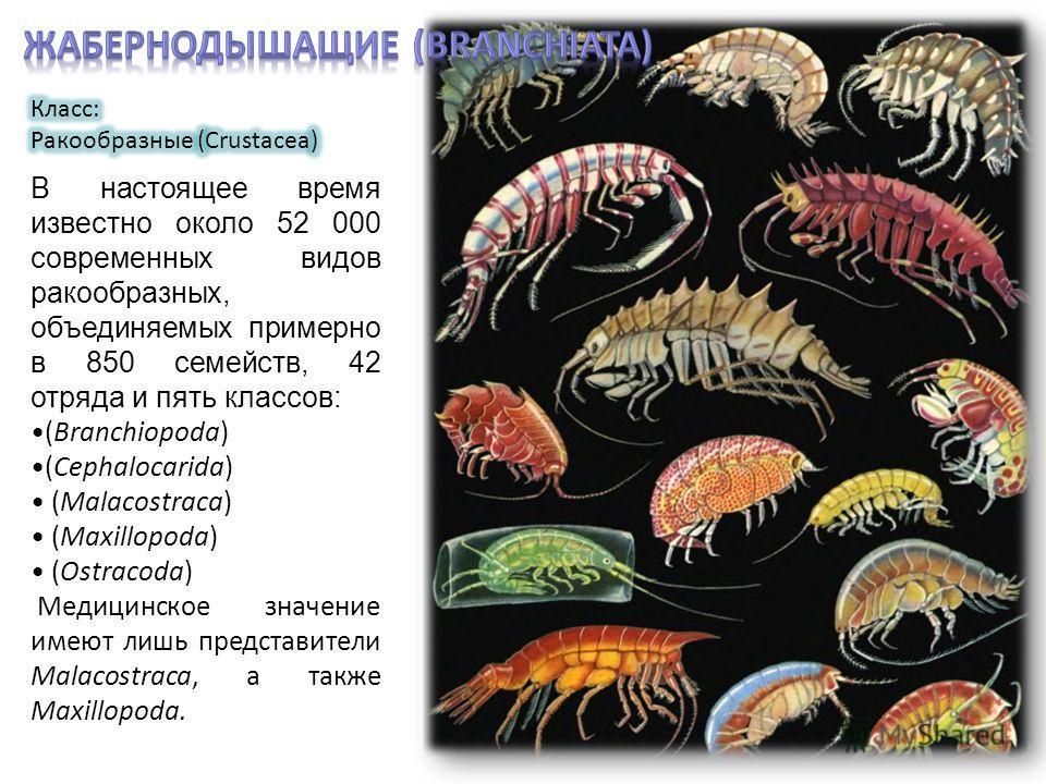 В настоящее время известно около 52 000 современных видов ракообразных, объединяемых примерно в 850 семейств, 42 отряда и пять классов: (Branchiopoda) (Cephalocarida) (Malacostraca) (Maxillopoda) (Ostracoda) Медицинское значение имеют лишь представит