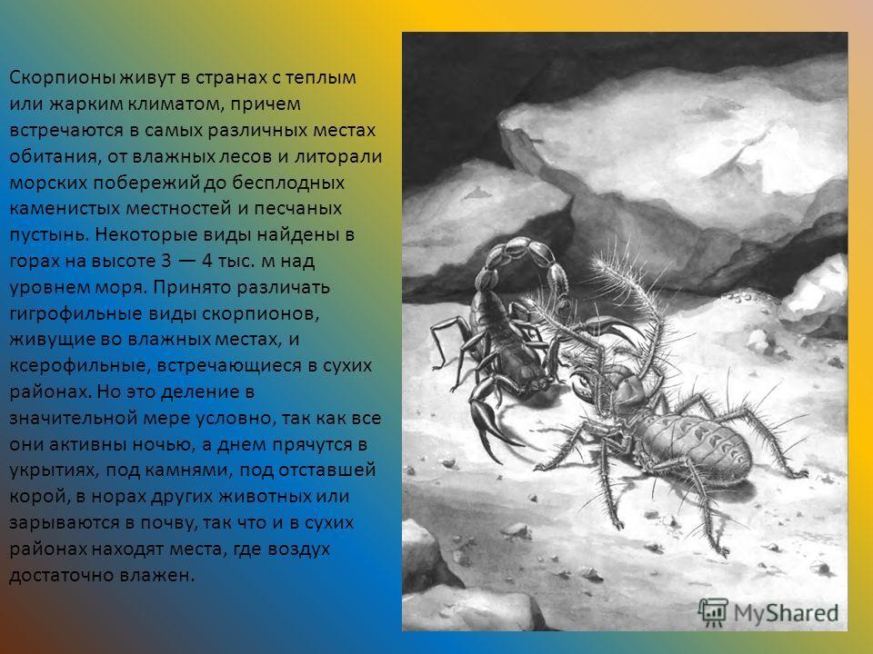 Скорпионы живут в странах с теплым или жарким климатом, причем встречаются в самых различных местах обитания, от влажных лесов и литорали морских побережий до бесплодных каменистых местностей и песчаных пустынь. Некоторые виды найдены в горах на высо