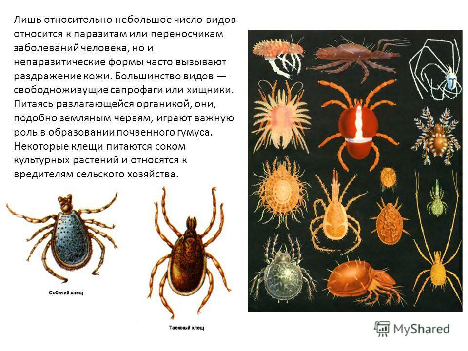 Лишь относительно небольшое число видов относится к паразитам или переносчикам заболеваний человека, но и непаразитические формы часто вызывают раздражение кожи. Большинство видов свободноживущие сапрофаги или хищники. Питаясь разлагающейся органикой