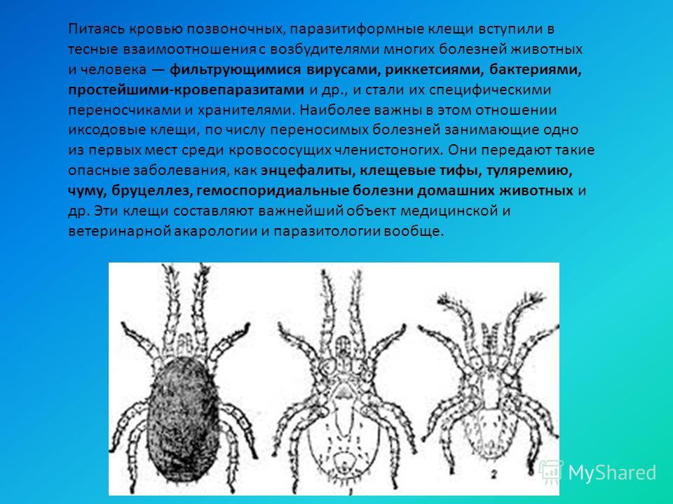 Питаясь кровью позвоночных, паразитиформные клещи вступили в тесные взаимоотношения с возбудителями многих болезней животных и человека фильтрующимися вирусами, риккетсиями, бактериями, простейшими-кровепаразитами и др., и стали их специфическими пер