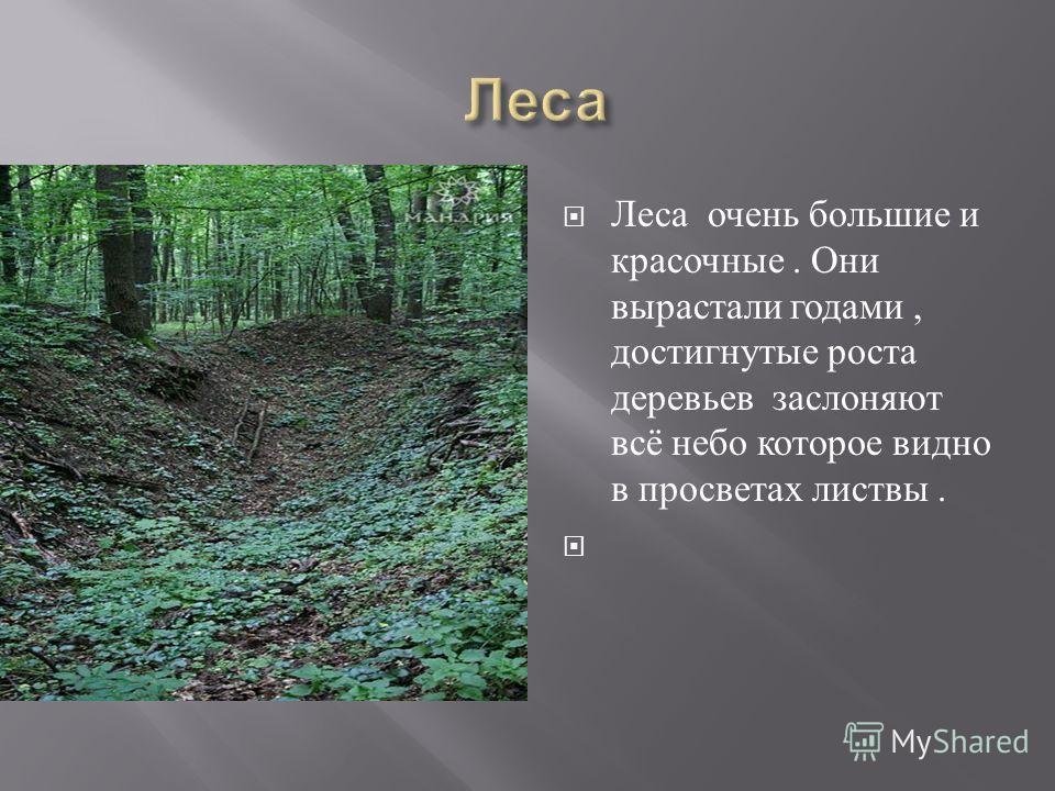 Леса очень большие и красочные. Они вырастали годами, достигнутые роста деревьев заслоняют всё небо которое видно в просветах листвы.