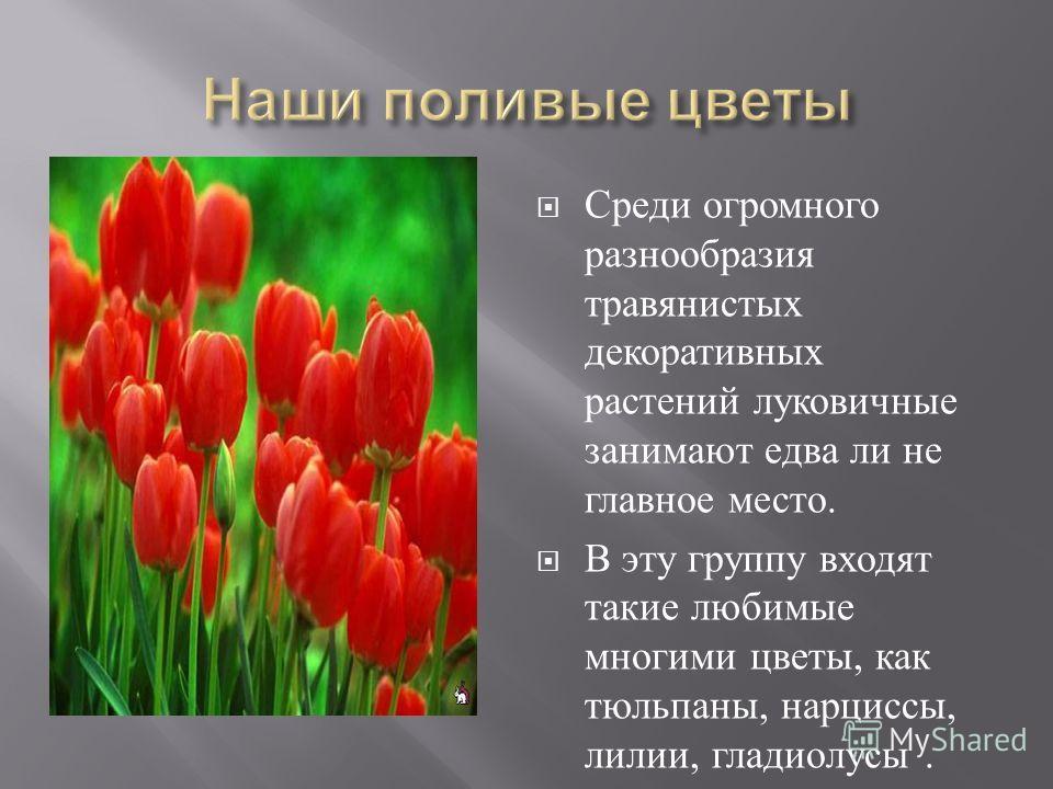 . Среди огромного разнообразия травянистых декоративных растений луковичные занимают едва ли не главное место. В эту группу входят такие любимые многими цветы, как тюльпаны, нарциссы, лилии, гладиолусы.
