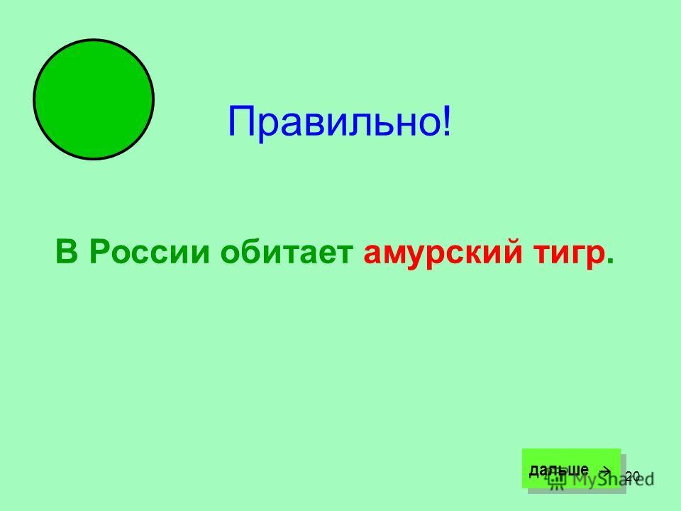 20 Правильно! В России обитает амурский тигр. дальше