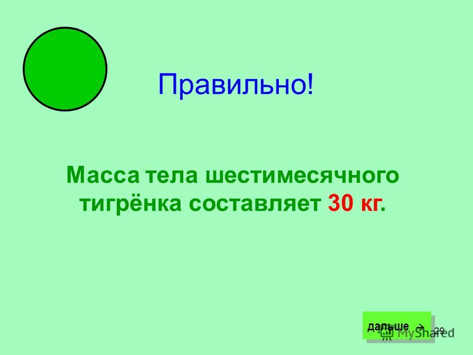 29 Правильно! Масса тела шестимесячного тигрёнка составляет 30 кг. дальше