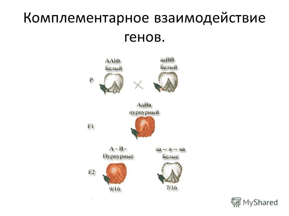 Комплементарное взаимодействие генов.