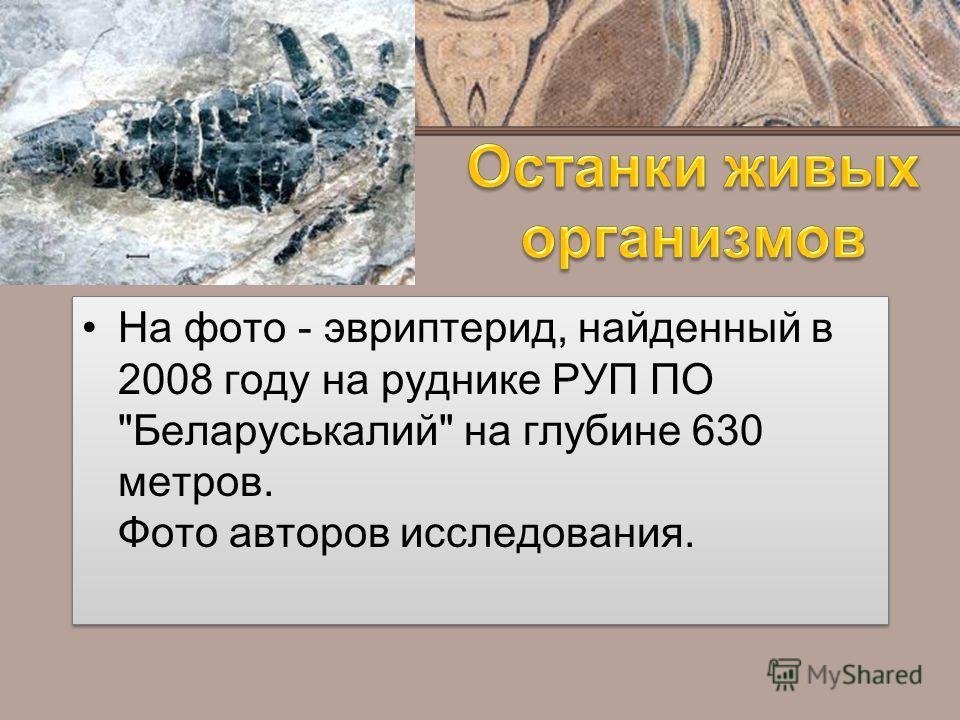 На фото - эвриптерид, найденный в 2008 году на руднике РУП ПО Беларуськалий на глубине 630 метров. Фото авторов исследования.