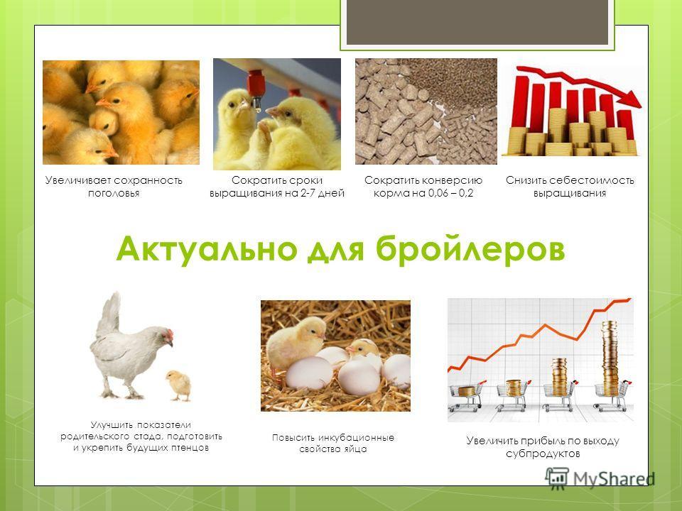 Актуально для бройлеров Сократить конверсию корма на 0,06 – 0,2 Повысить инкубационные свойства яйца Улучшить показатели родительского стада, подготовить и укрепить будущих птенцов Увеличить прибыль по выходу субпродуктов Снизить себестоимость выращи